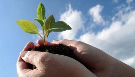 Ảnh minh họa: Ăn quả nhớ kẻ trồng cây
