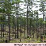 Làm sáng tỏ chất sử thi Rừng Xà Nu – Nguyễn Trung Thành
