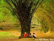 """Phương thức biểu đạt, nội dung chính, biện pháp tu từ """"Tre Việt Nam"""" – Nguyễn Duy"""