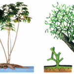 Bài 12 Biến dạng của rễ (Giải bài 1,2 trang 42 Sinh 6)