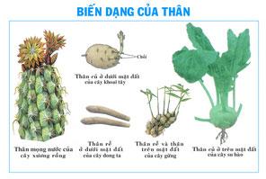 bien-dang-cua-than-sinh-hoc-lop-6