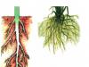 Bài 9 Các loại rễ – các miền của rễ (Bài 1,2 trang 31 môn sinh 6)