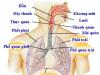 Bài 64: Các bệnh lây truyền qua đường sinh dục (bệnh tình dục) sinh 8