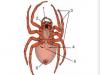 Bài 25 Nhện và sự đa dạng của lớp hình nhện (Giải bài 1,2,3 trang 85 Sinh học 7)