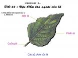 Bài19 Đặc điểm bên ngoài của lá (Bài 1,2,3 trang 64 môn sinh 6)