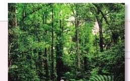 Bài 3 Đặc điểm chung của thực vật(Bài tập 1,2,3 trang 12 Sinh lớp 6)