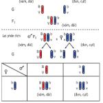 Di truyền liên kết: Bài tập 1,2,3,4 trang 43 Sinh học 9