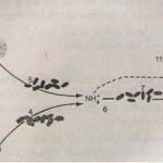 Dinh dưỡng nitơ ở thực vật (tiếp theo) – Bài 1,2,3 trang 31 Sinh lớp 11