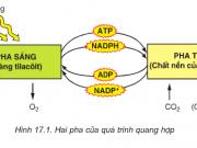 Bài 1,2,3,4,5,6 trang 70 SGK Sinh 10: Quang hợp