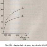 Đề kiểm tra 1 tiết môn Lý lớp 10 Chương 4 – THPT Gio Linh