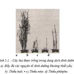 Dinh dưỡng nitơ ở thực vật (Bài 1,2,3 SGK Sinh học 11 trang 27)