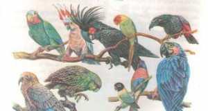Bài 1: Thế giới động vật đa dạng và phong phú (Bài 1,2 trang 8 Sinh 7)