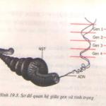 Mối quan hệ giữa gen và tính trạng: Giải bài 1,2,3 trang 59