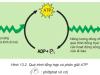 Khái quát về năng lượng và chuyển hóa vật chất(Giải bài 1,2,3,4 trang 56 Sinh 10)