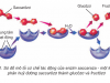 [Sinh 10 trang 59] Enzim và vai trò của enzim trong quá trình chuyển hóa vật chất
