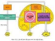 Hô hấp tế bào: Bài 1,2,3 trang 66 môn Sinh học 10