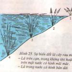 Thường biến: Bài 1,2,3 trang 73 SGK Sinh 9
