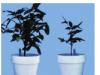 Bài 11 Sự hút nước và muối khoáng của rễ (Bài tập 1,2,3 trang 37 Sinh lớp 6)
