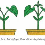 Bài 14 Thân dài ra do đâu (Bài 1,2 trang 47 Sinh học 6)