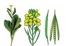 Bài 4 Có phải tất cả thực vật đều có hoa (Giải bài 1,2,3 trang 15 Sinh 6)