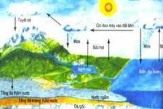 Diễn thế sinh thái: Bài 1,2,3,4 SGK môn sinh 12 trang 185