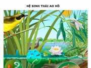 Hệ sinh thái: Giải bài 1,2,3,4 Sinh lớp 12 trang 190