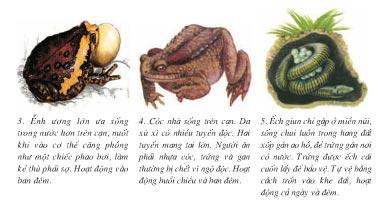 dac-diem-chung-cua-lop-luong-cu