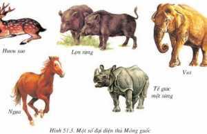Giải bài 1,2,3 trang 169 SGK Sinh 7: Đa dạng của lớp thú các bộ móng guốc và bộ linh trưởng