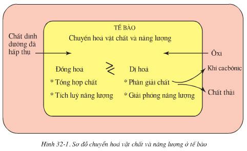 so-do-chuyen-hoa-chat-va-nang-luong-o-te-bao