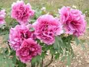 Bài 36 tổng kết về cây có hoa (tiếp theo): Giải bài 1,2,3 trang 121 Sinh lớp 6