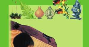 Bài tập trắc nghiệm Sinh 6 – chương 5,6,7: Bao hoa gồm có hai thành phần, đó là?