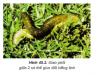 Sinh sản hữu tính ở động vật: Bài 1,2,3,4 trang 178 môn sinh 11