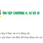 Giải bài tập SGK trang 186,187 Sinh 11: Ôn tập chương 2,3 và 4
