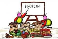 Giải bài 1,2,3, 4 trang 160 SGK Hóa 9: Protein