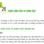 Sinh sản của vi sinh vật: Bài 1,2,3 trang 105 SGK Sinh 10