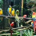 Tả một chú vẹt trong vườn bách thú