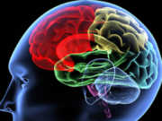 Kiểm tra 1 tiết cuối kì 1 GDCD lớp 10, Sự khác nhau giữa nhận thức cảm tính và lý tính?