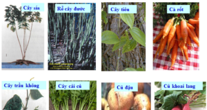 Xem ngay đề kiểm tra chương 2 Sinh 6 có đáp án: Rễ thực vật được phân chia làm mấy loại chính