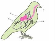 Đề kiểm tra học kì 2 Sinh học 7: Các ngón chân có vuốt cùn không thu được vào trong đệm thịt, thích nghi với cách bắt mồi nào sau đây?