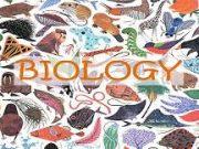 Đề kiểm tra 15 phút Phần Vi khuẩn, Nấm, Địa y Sinh lớp 6: Vi khuẩn có những hình dạng nào?