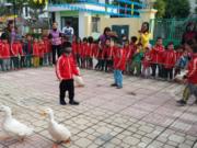 Trò chơi 'Bắt Vịt Con' luyện cho trẻ vận động nhanh nhẹn, khéo léo khi di chuyển