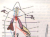 Đề kiểm tra học kì 2 Sinh học 7: Hệ thần kinh của thằn lằn phát triển hơn so với hệ thần kinh của ếch là do