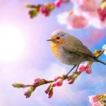 Đề kiểm tra học kì 2 – Tiếng Việt 3: Hình ảnh nào tả vẻ đáng yêu của hoa đào và cô bé?