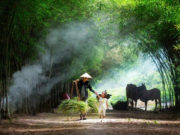 [Đề số 8] Đề kiểm tra học kì 1 môn Tiếng Việt lớp 5: Bạn nhỏ trong bài cho rằng nhiều người yêu buổi sáng vì lí do gì?