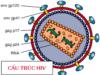 Thi học kì 2 Sinh môn 10: Giai đoạn nào của hô hấp tế bào tạo ra nhiều ATP nhất?