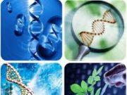 Đề kiểm tra 45 phút Chương 6 – Ứng dụng di truyền học Sinh lớp 9: Nêu sự khác nhau giữa thực vật ưa sáng và ưa bóng.