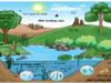 Đề kiểm tra 45 phút Phần 5 Chương 6 – Sự sinh trưởng và phát triển của sự sống trên Trái Đất Sinh 12: Quá trình tiến hóa trên trái đất diễn ra theo thứ tự?