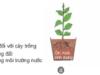 Bài 2. Khái niệm về đất trồng và thành phần đất trồng – Công nghệ 7: vai trò của từng thành phần đó đối với cây trồng ?