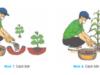 Bài 9. Cách sử dụng và bảo quản các loại phân bón thông thường – Công nghệ 7: Phân hữu cơ , phân lân thường dùng để bón lót hay bón thúc ?
