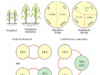 Bài 10. Vai trò của giống và phương pháp chọn giống cây trồng- Công nghệ 7: Thế nào là tạo giống bằng phương pháp chọn lọc ?
